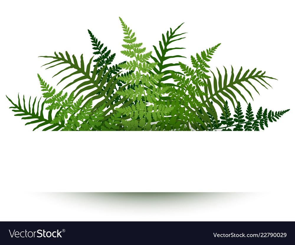 Fern frond frame polypodiophyta plant leaves