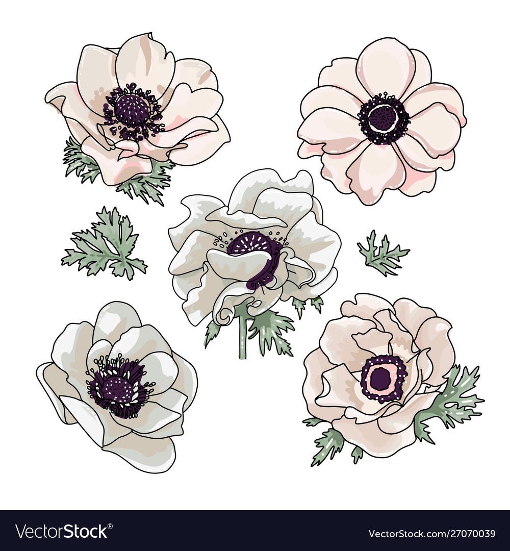 Set hand drawn anemones for floral bouquet