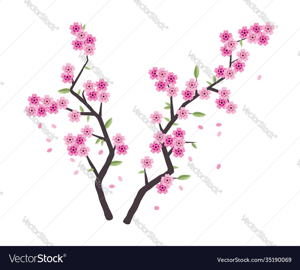 Sakura branches with pink blossom