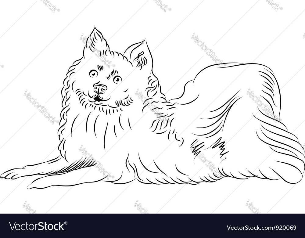 Sketch American Eskimo Dog breed lying vector image