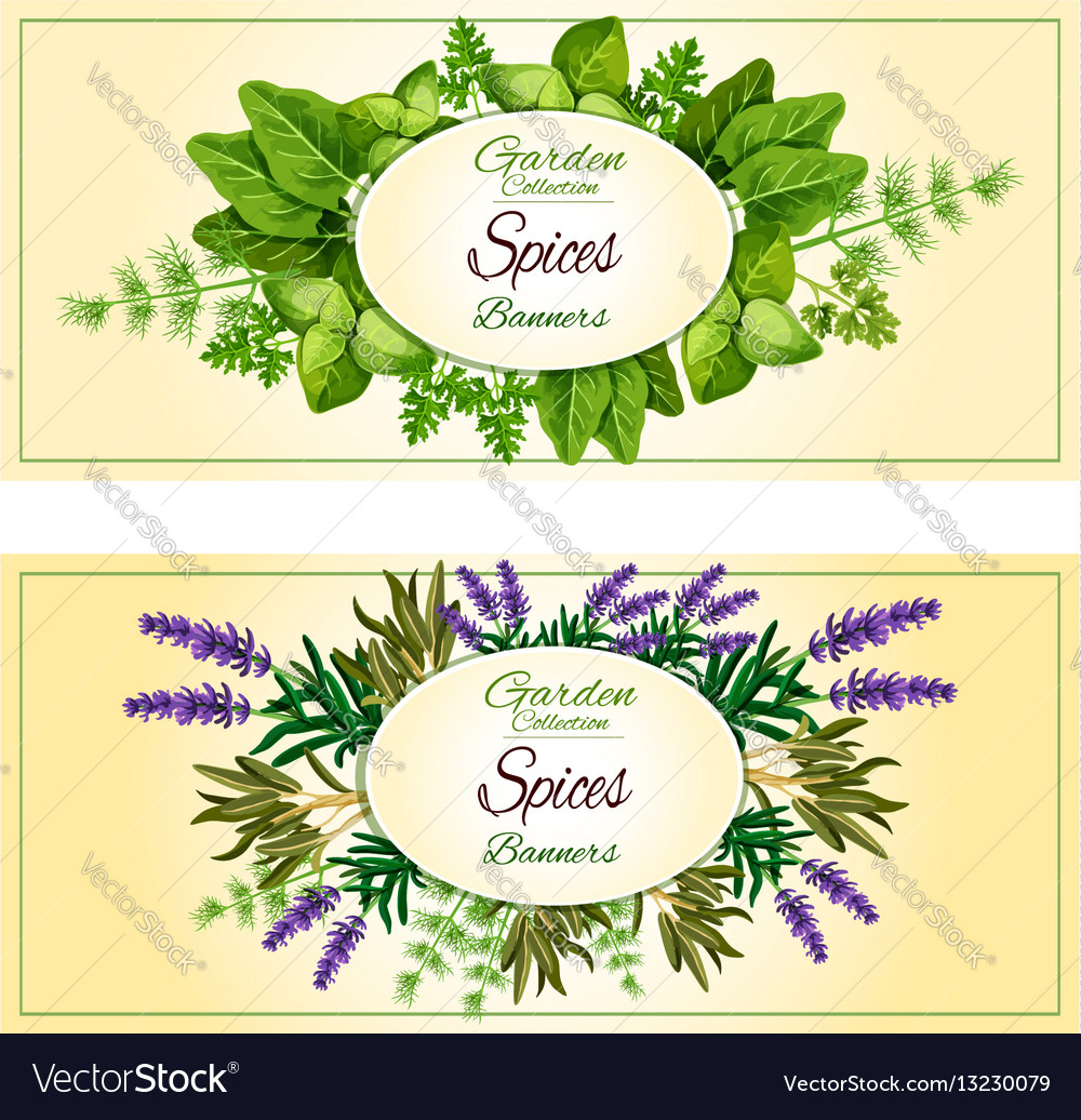 Herbal spices herbs banners set