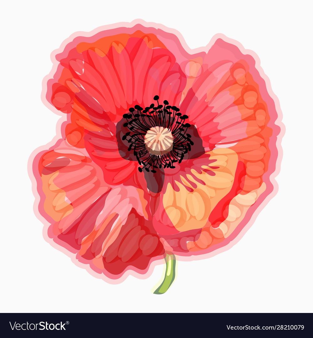 Poppy watercolor floral floral decorative element