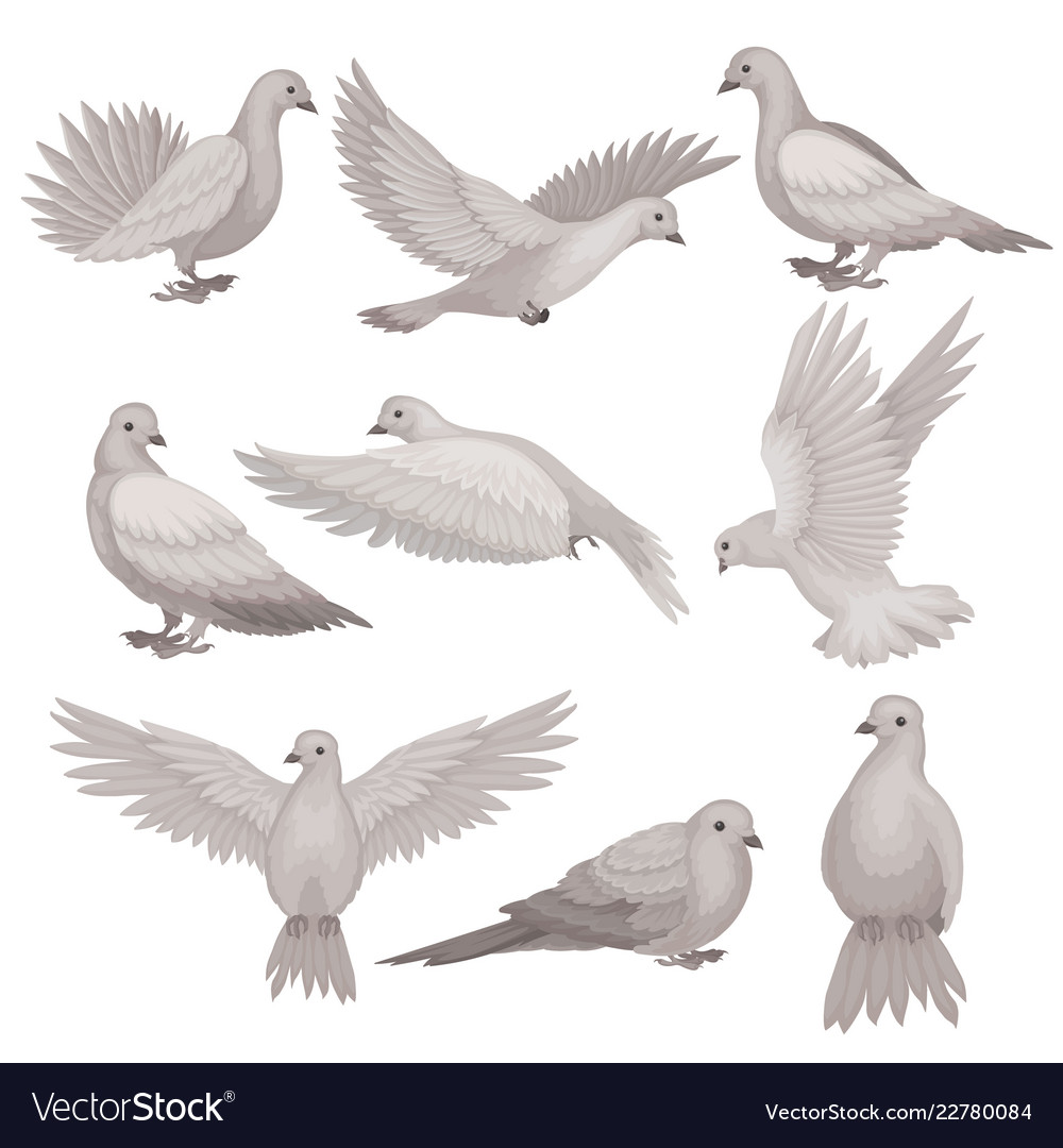 Flat set of dove bird with small head