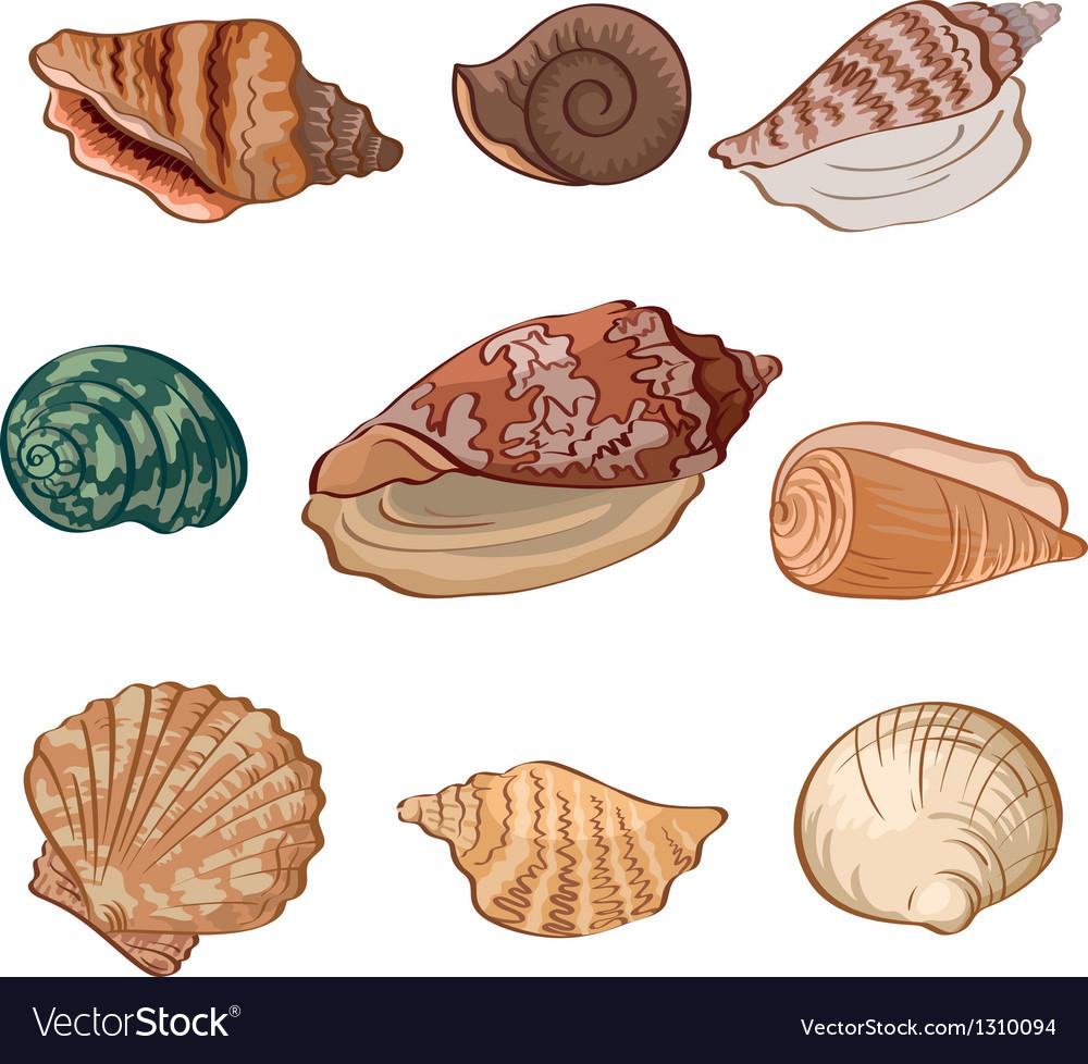 Set seashells