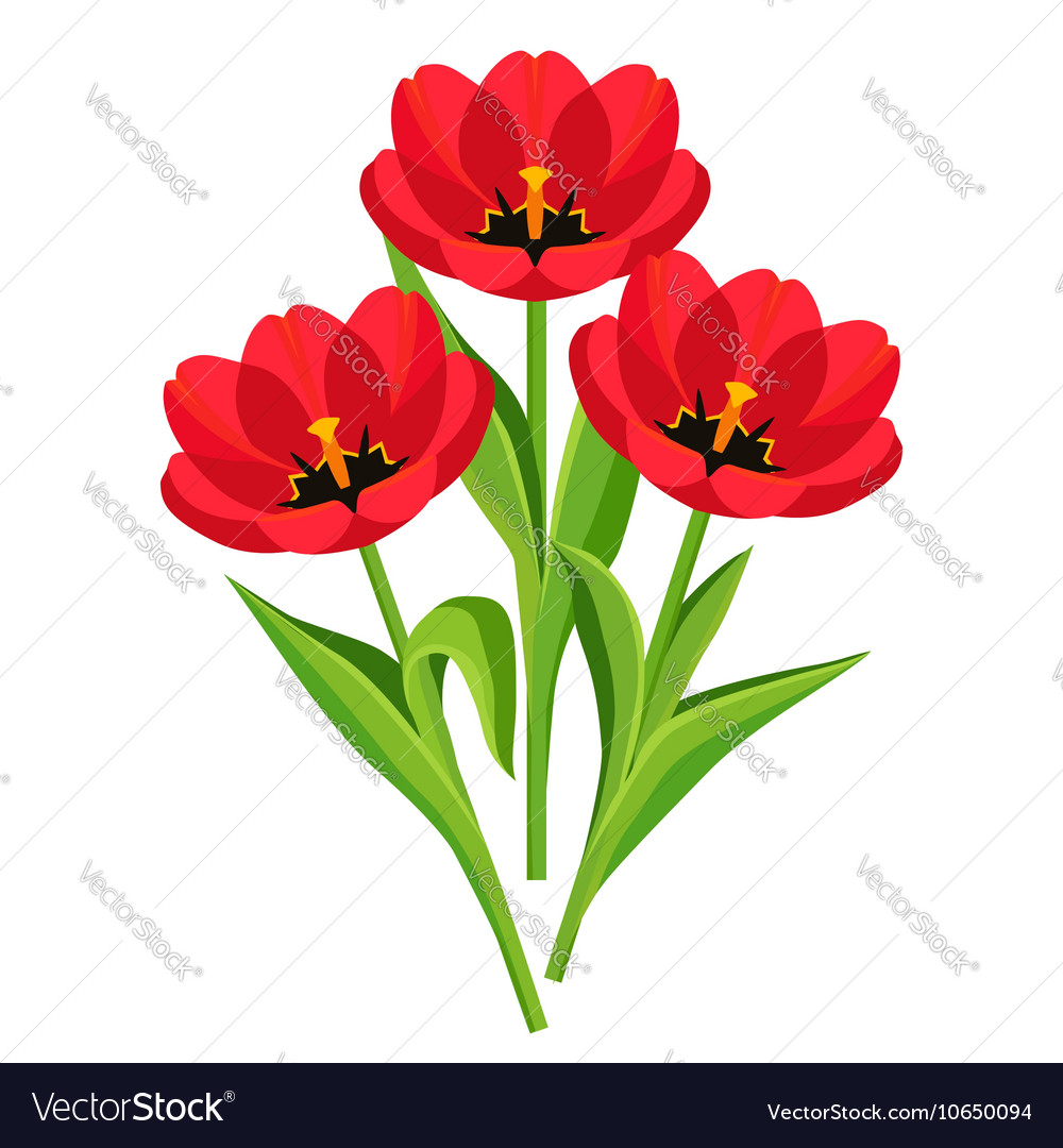 Spring Flowers Tulips On White Background