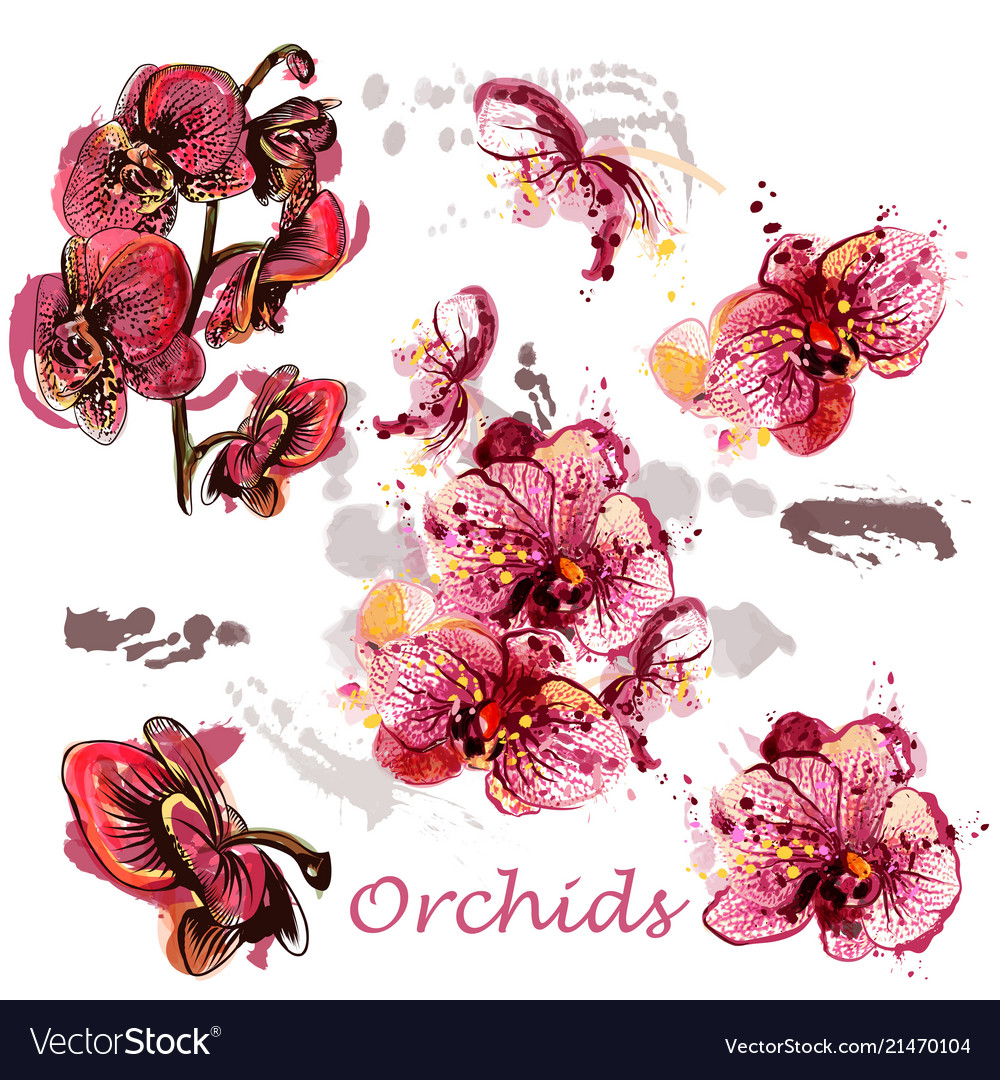 Set of orchids drawn in watercolor style