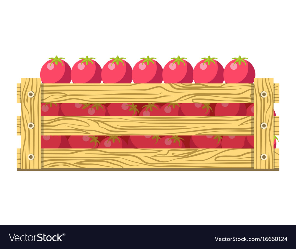 Ripe fresh tomatoes in wooden box isolated