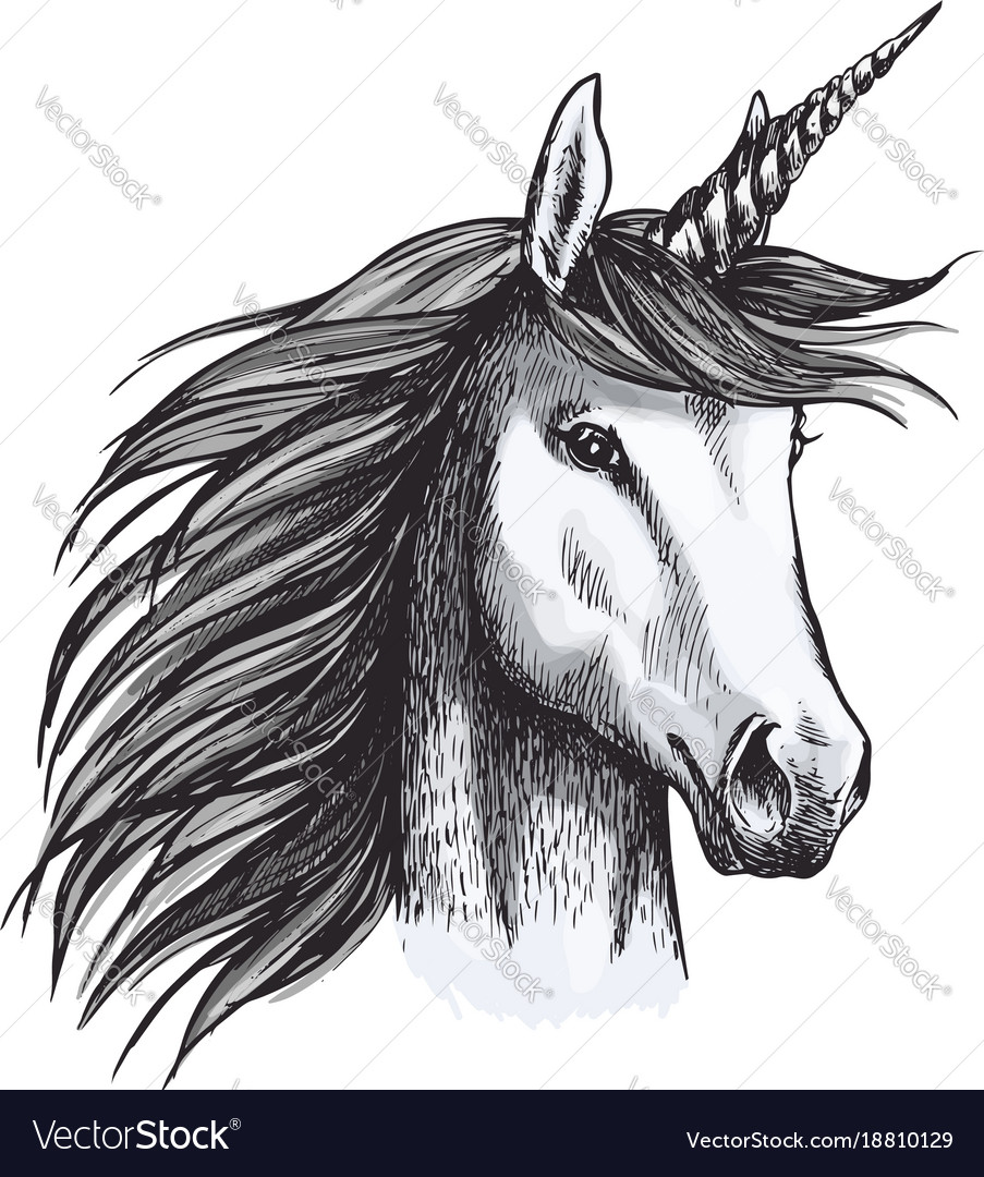 Unicorn Mystic Magic Horse Animal Sketch Vector Image