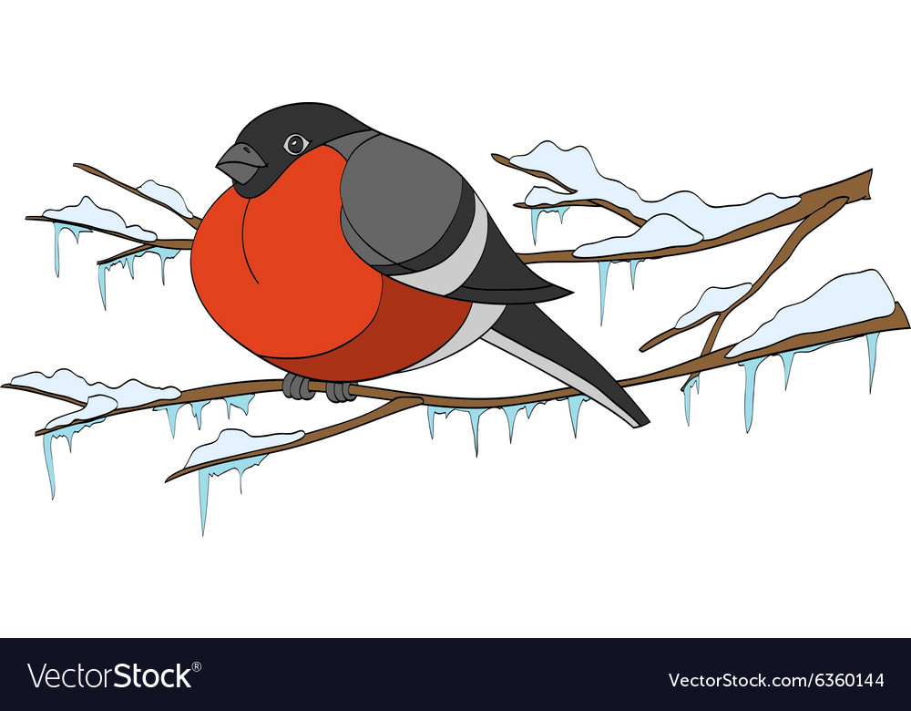 Bullfinch on winter branch