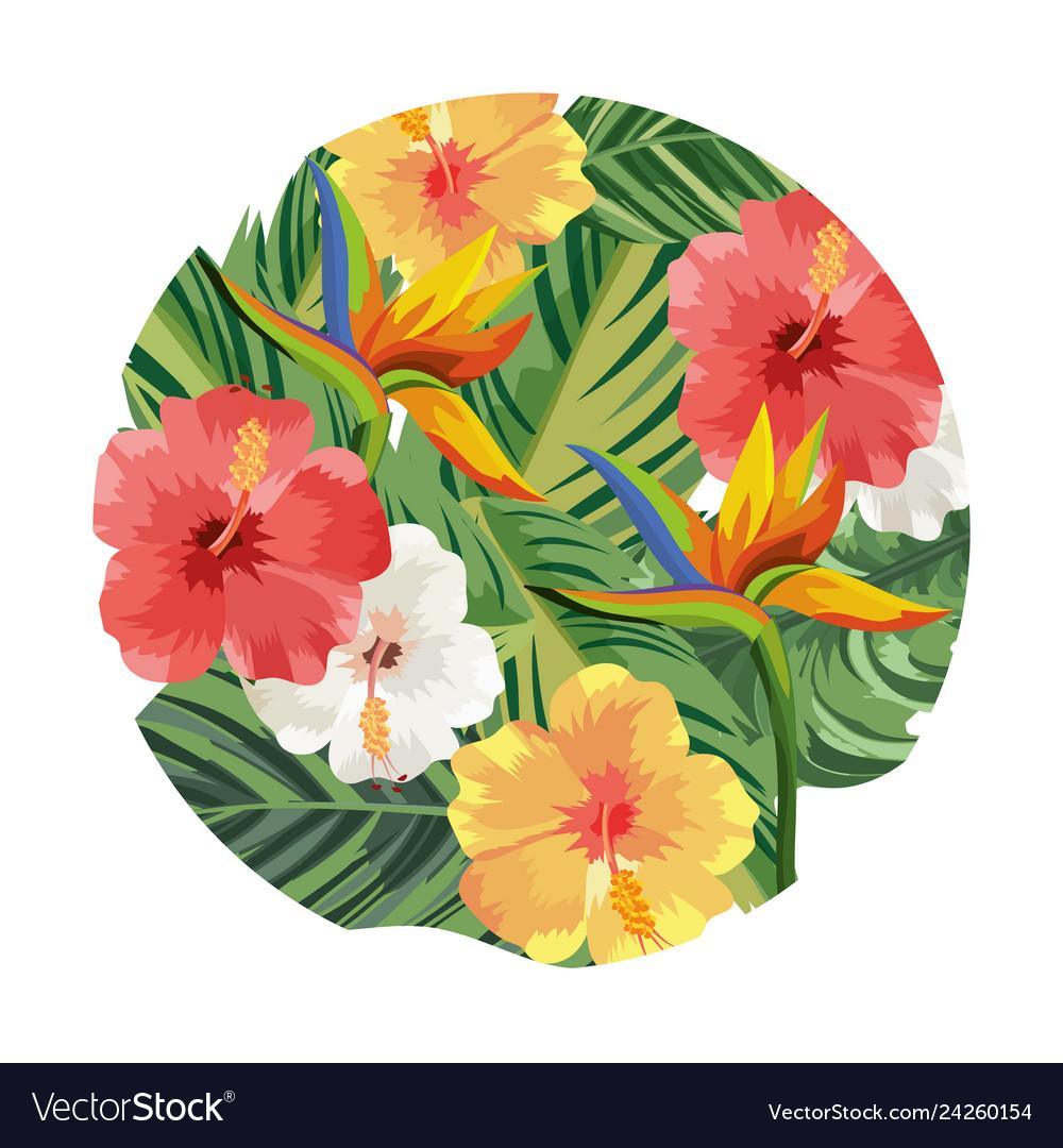 Nature flowers cartoon