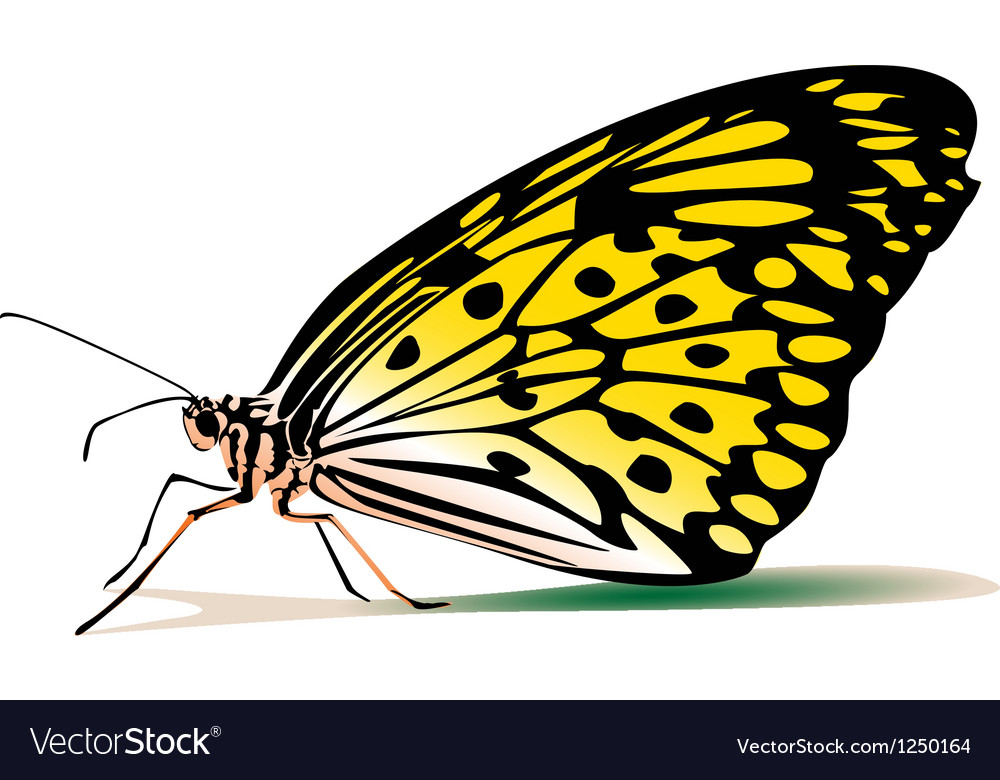 Yellow butterfly vector image