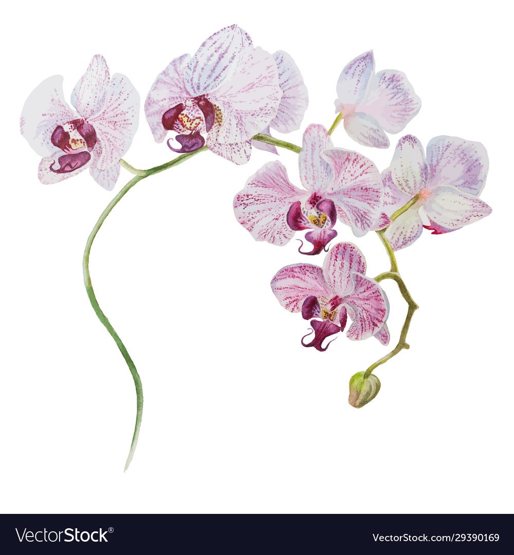 Beautiful orchid blooming branch watercolor hand