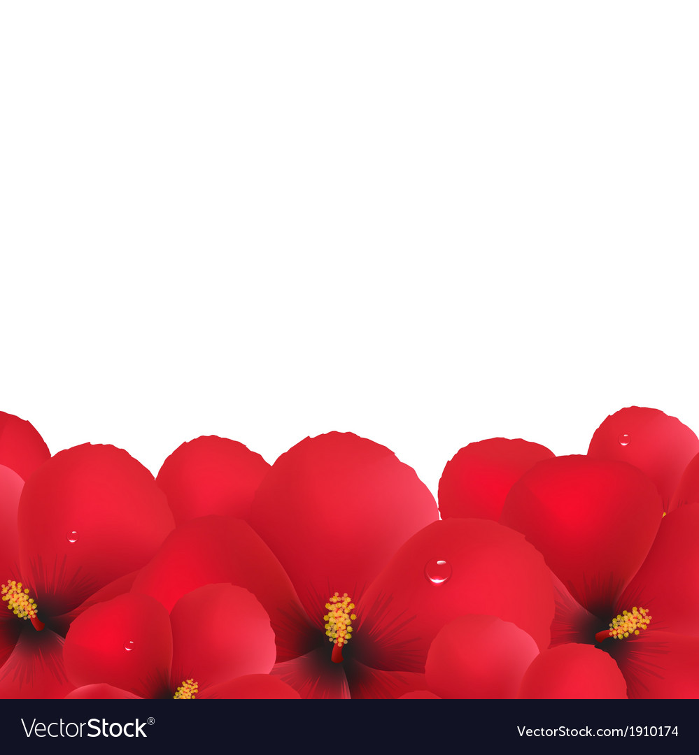 Red Hibiscus Flowers Border Royalty Free Vector Image