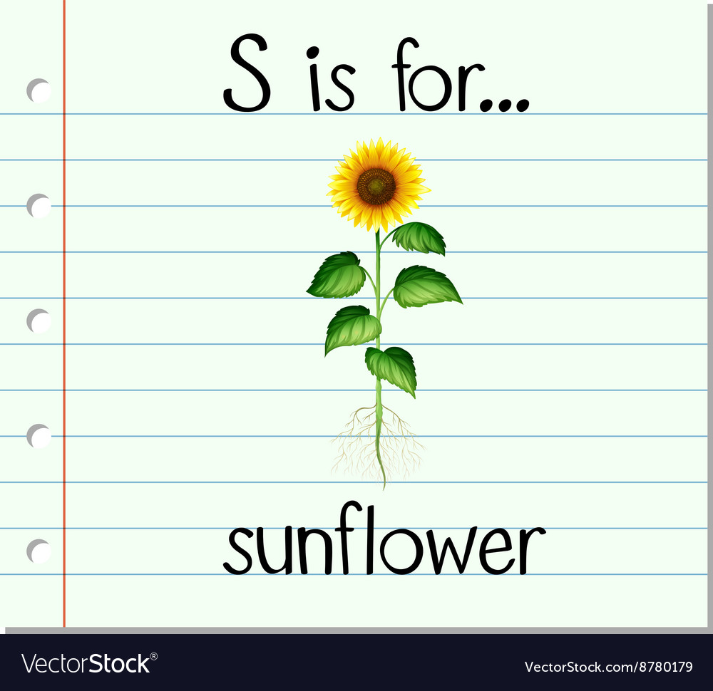 Flashcard letter S is for sunflower