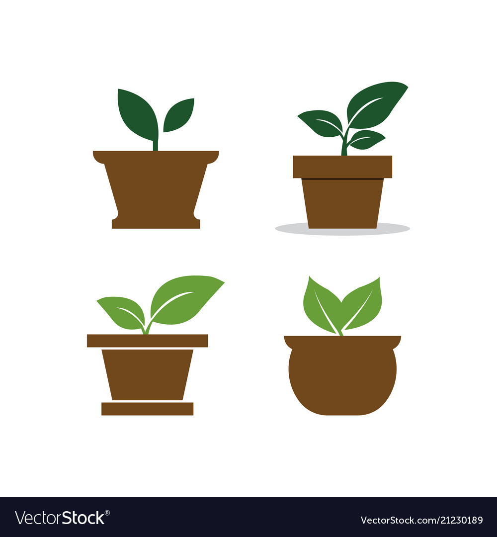Plant Pot Logo Design Template Vector Image