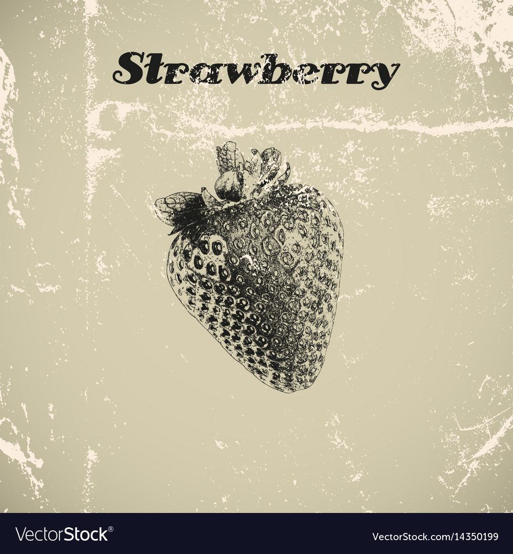 Ink hand drawn vintage strawberry vintage fruit vector image