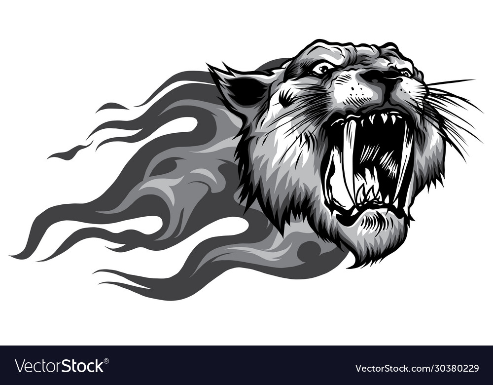 Head roaring tiger in tongues flame angry