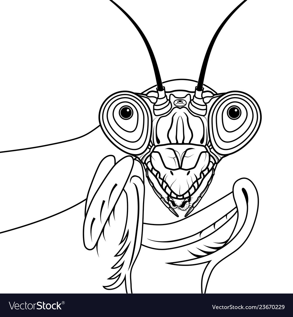 Portrait Of Green Praying Mantis Royalty Free Vector Image