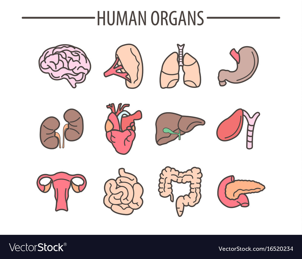 Human organs medical flat isolated icons