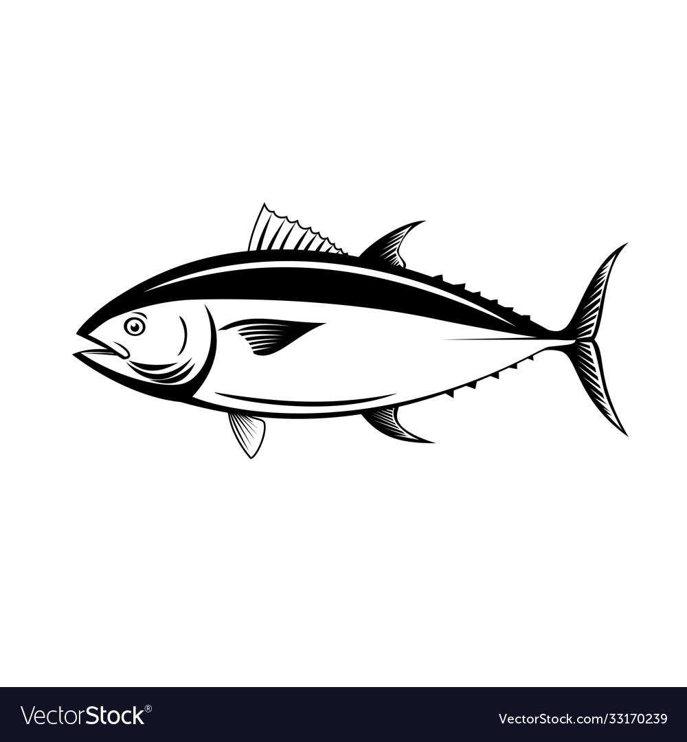 Atlantic bluefin tuna northern bluefin tuna giant