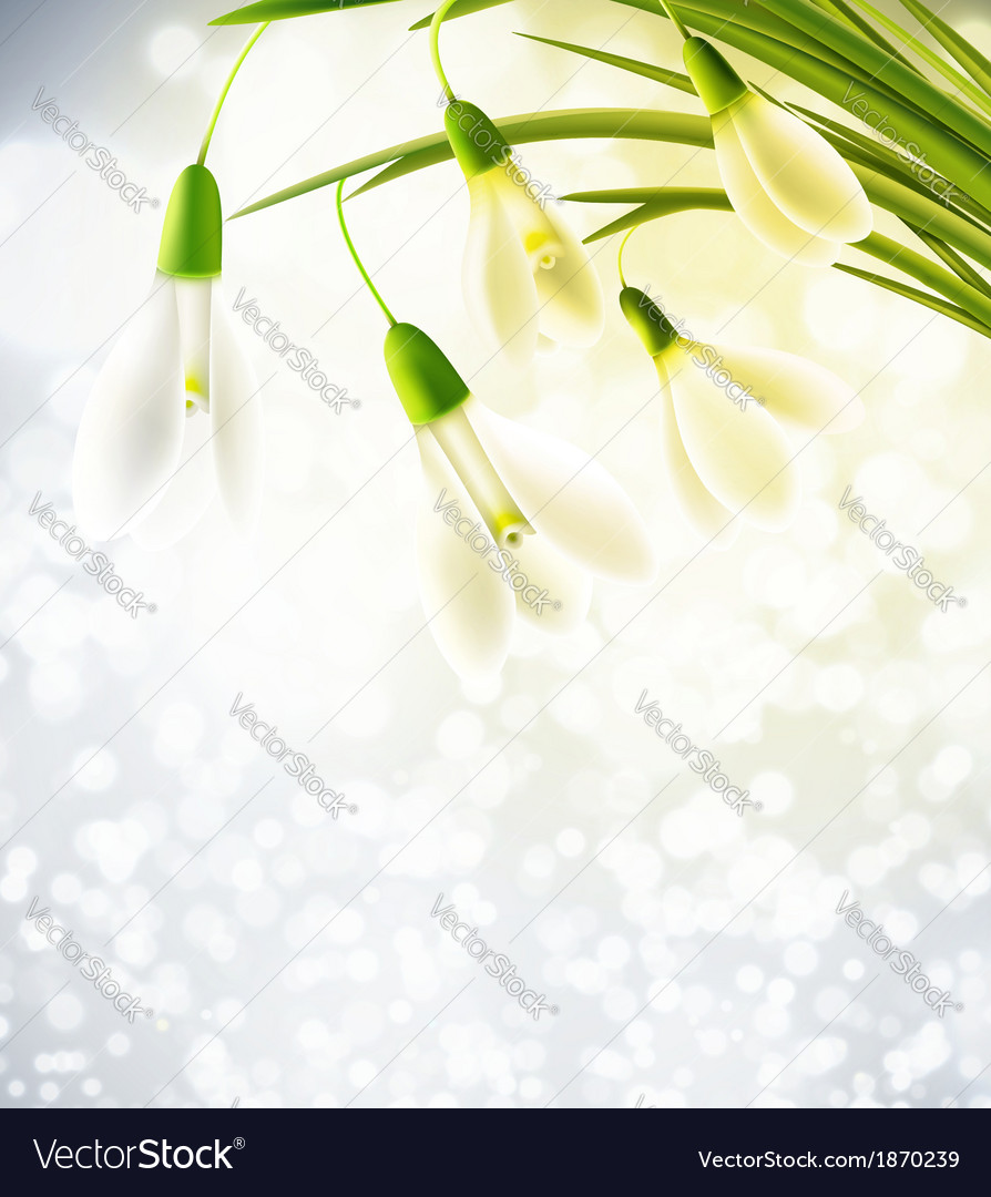 Background with snowdrops