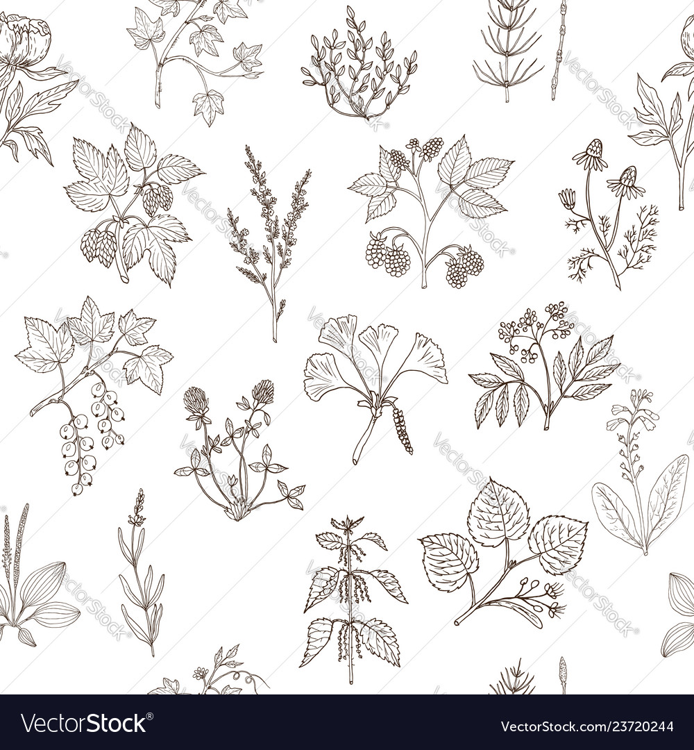 Seamless pattern with hand drawn medicinal plants