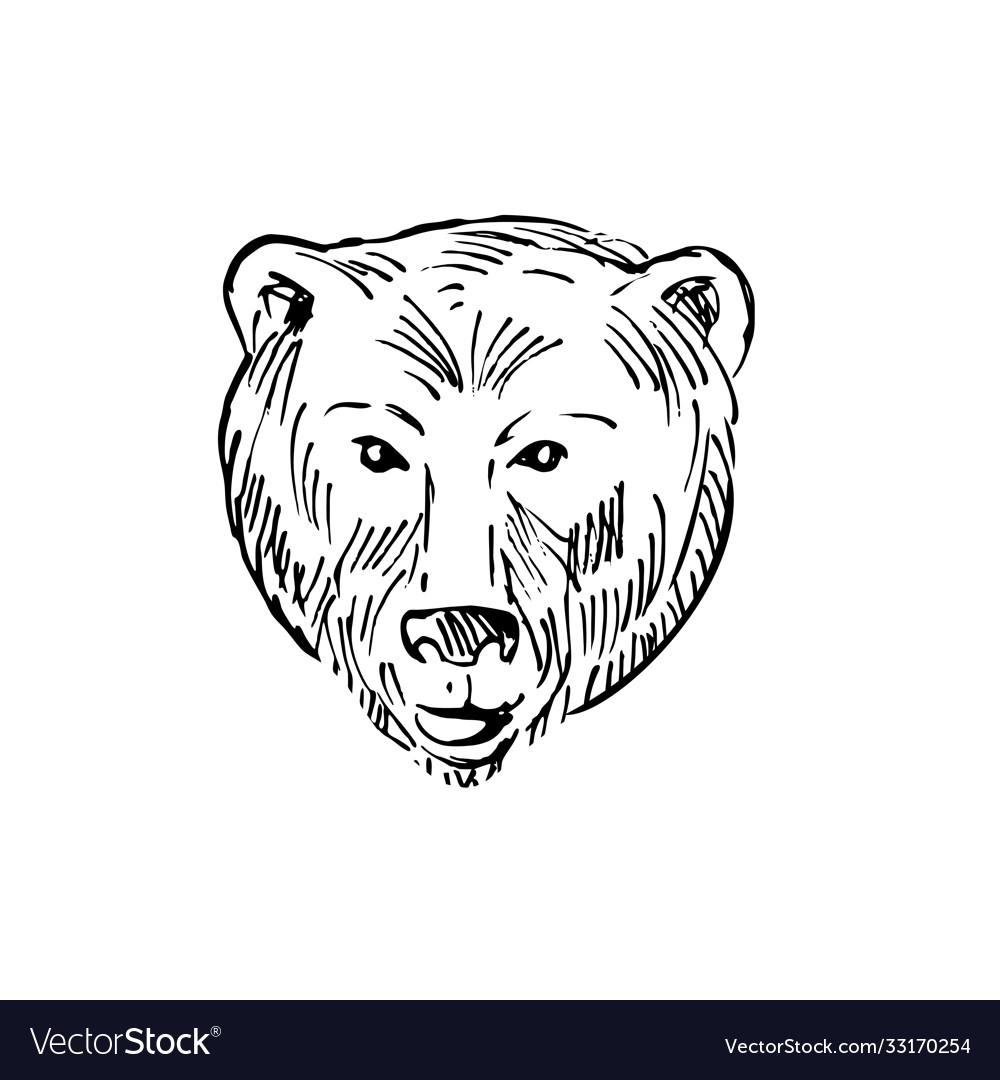 Head a brown bear ursus arctos or grizzly bear