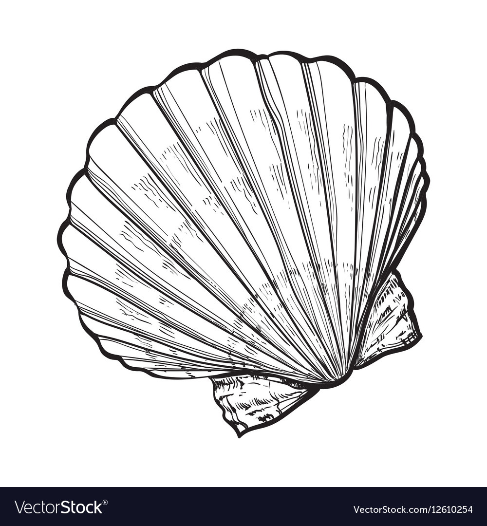 Saltwater scallop sea shell isolated sketch style