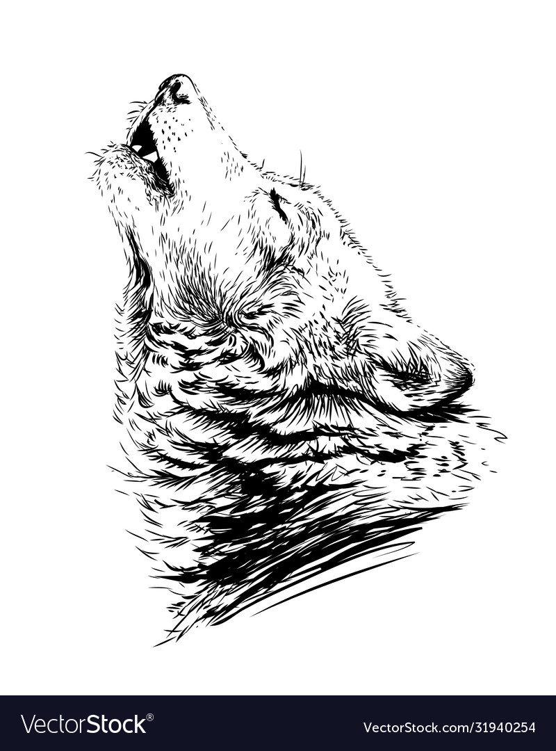 Wolf howlssketchy graphical portrait