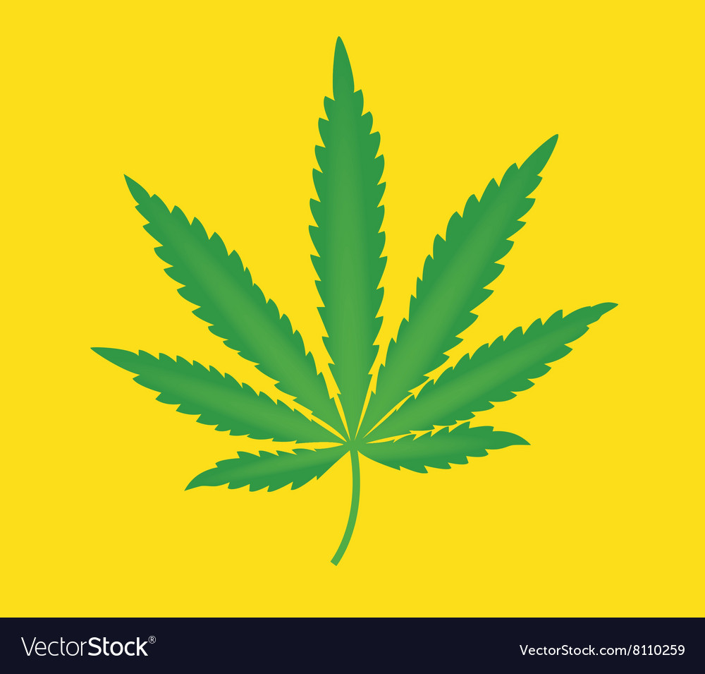 Marijuana leaf isolated with yellow background