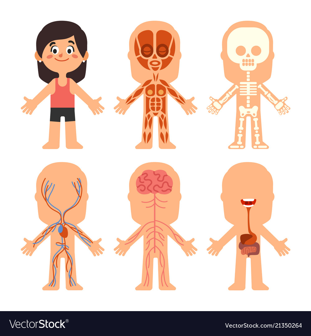 Cartoon girl body anatomy woman veins organs and Vector Image