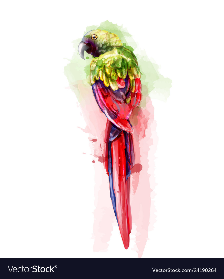 Tropic colorful parrot bird watercolor