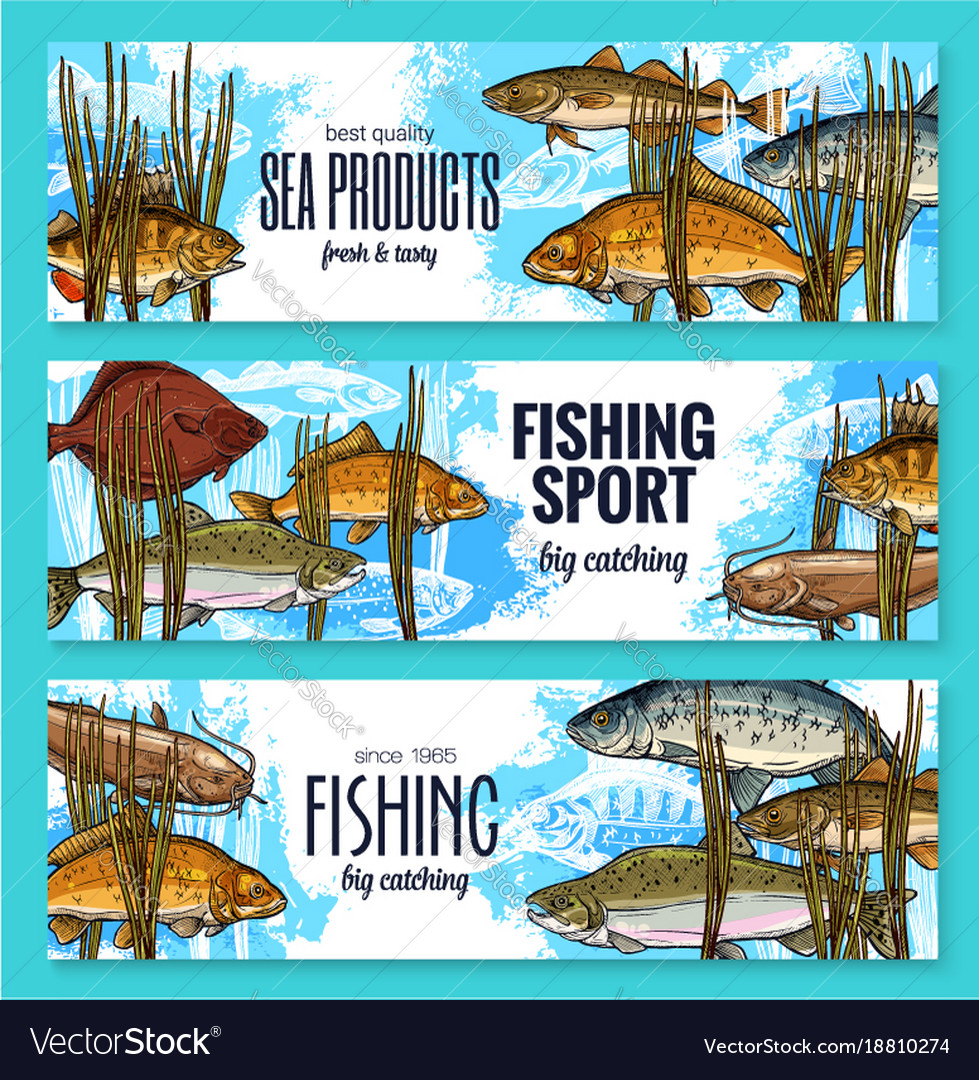 Fishes sketch banners fishing sport market vector image