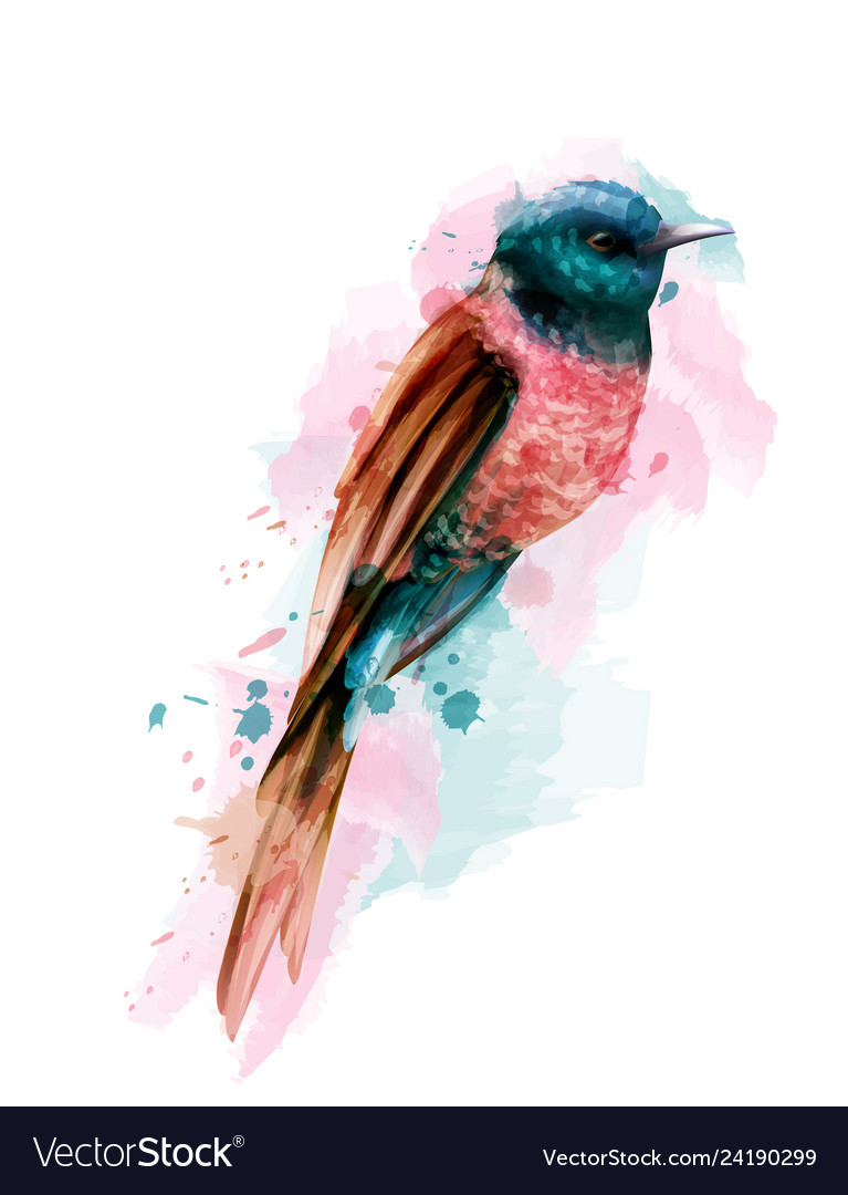 Tropic colorful small bird watercolor cute