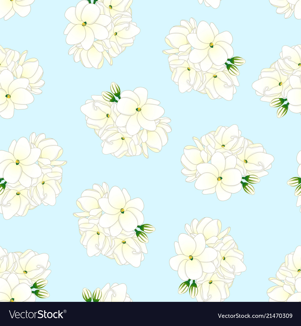 Arabian jasmine on light blue background