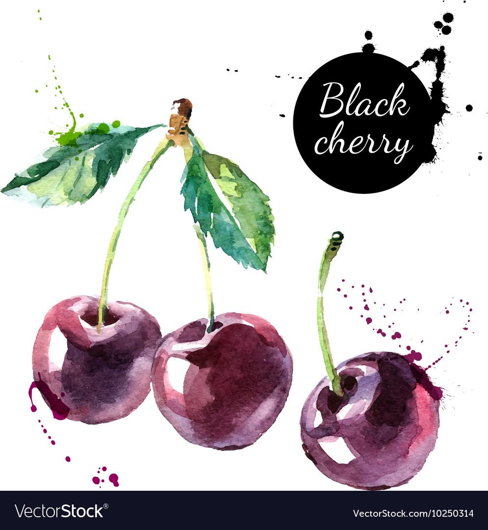 Hand drawn painting black cherry on white