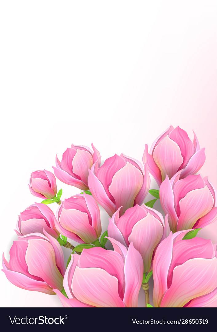 Beautiful background with magnolia flowers