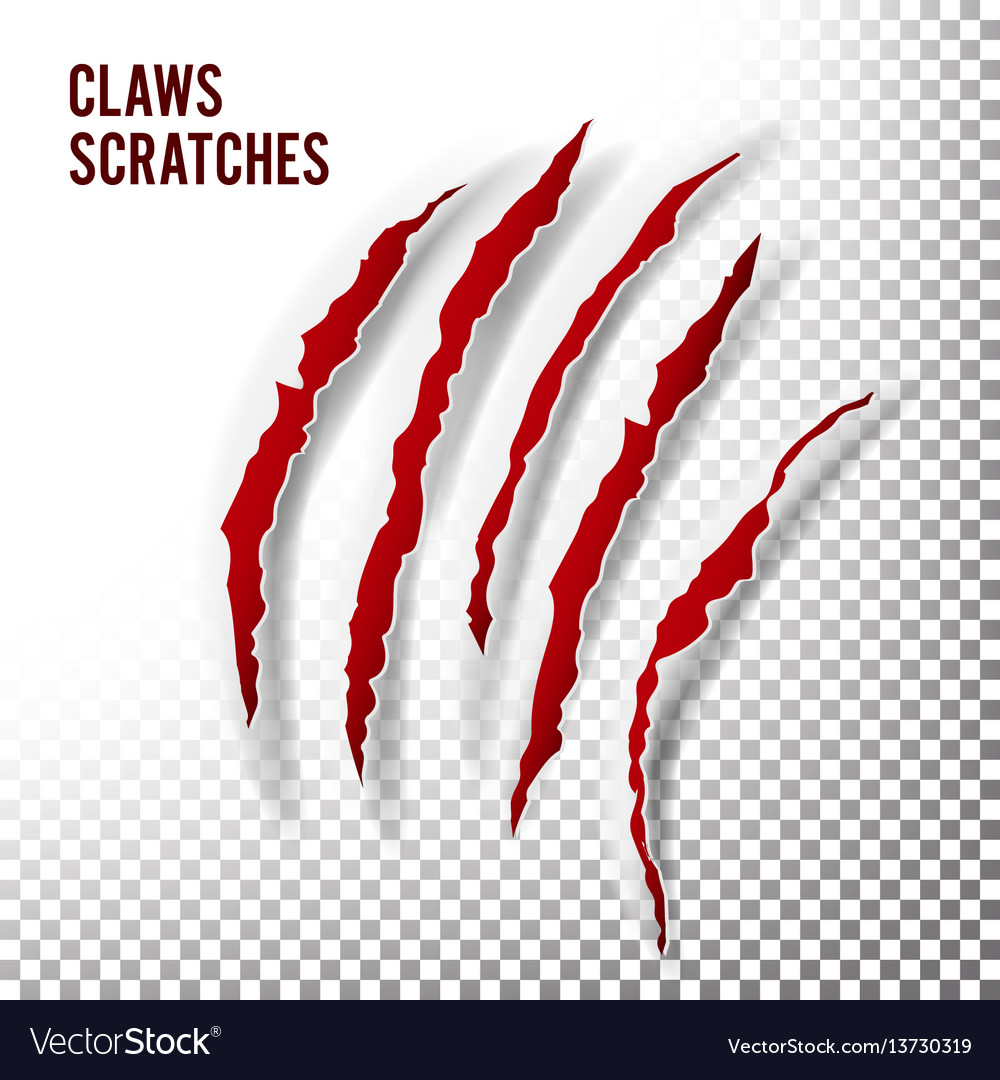 Claws scratches claw scratch mark bear or