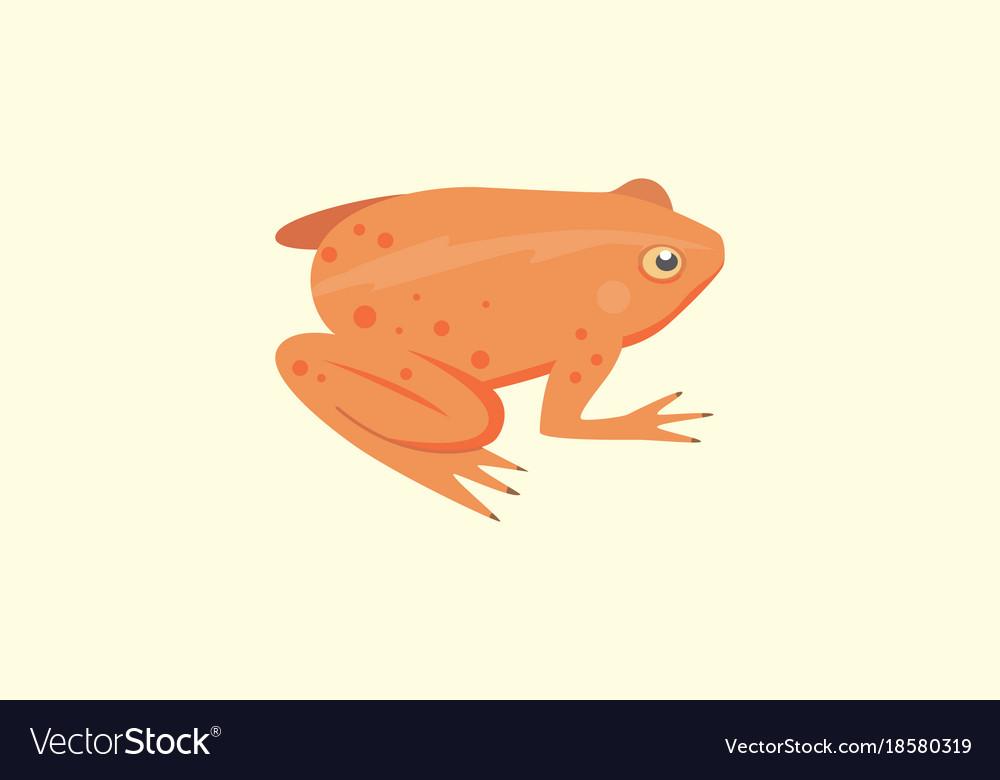 Frog cartoon isolated