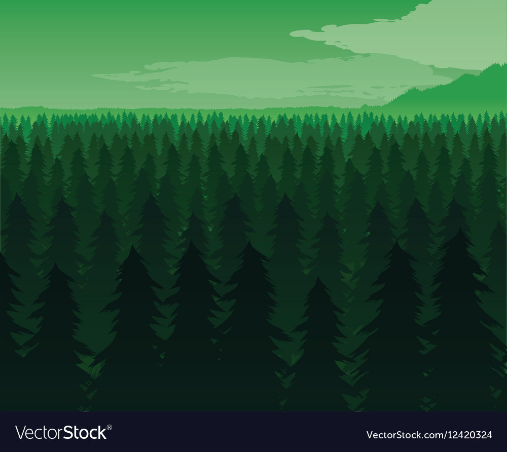 Background of landscape with deep fir forest