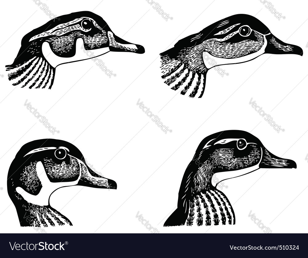Ducks faces vector image