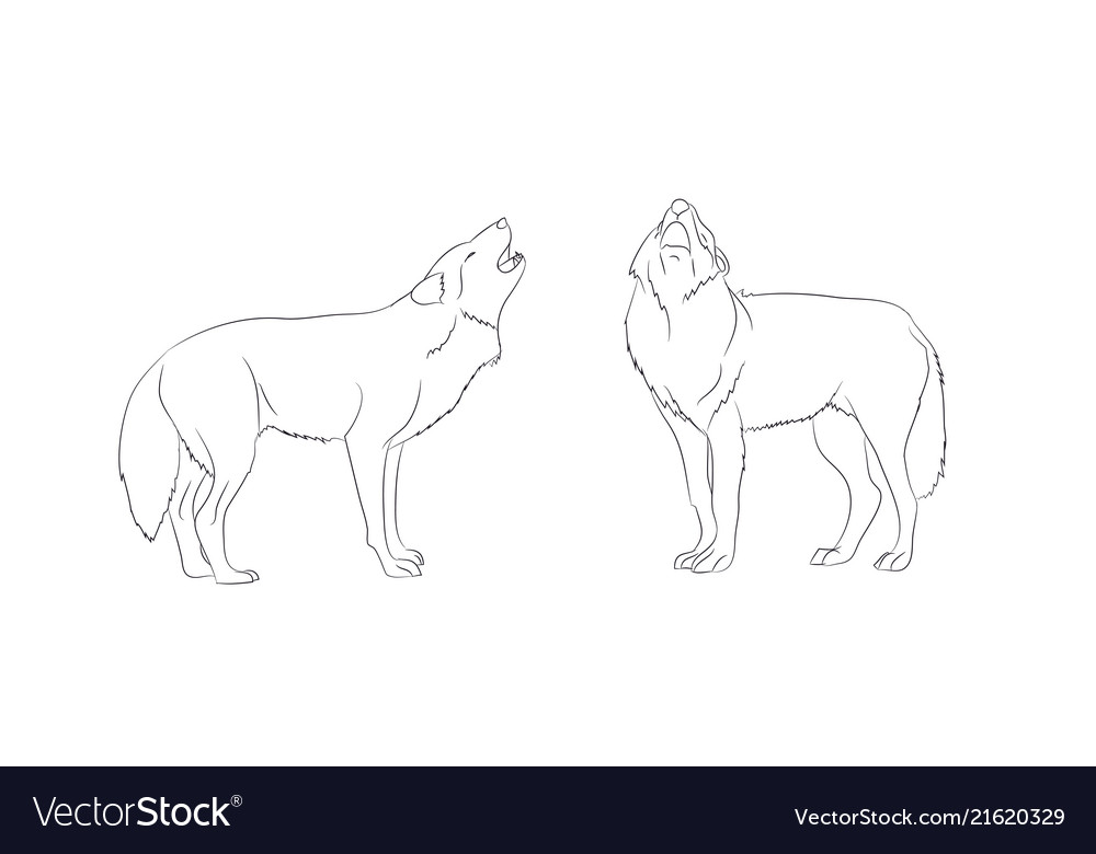 Wolf Howls Image Lines Royalty Free Vector Image