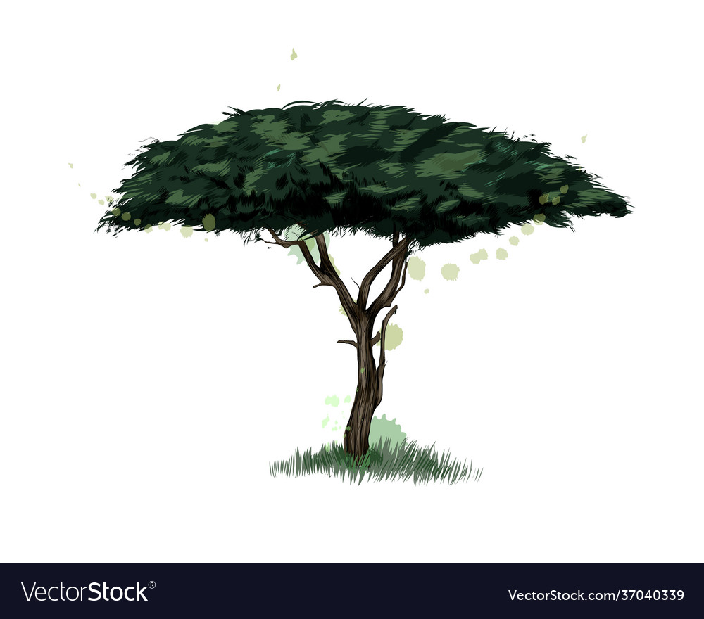 African acacia tree from a splash watercolor