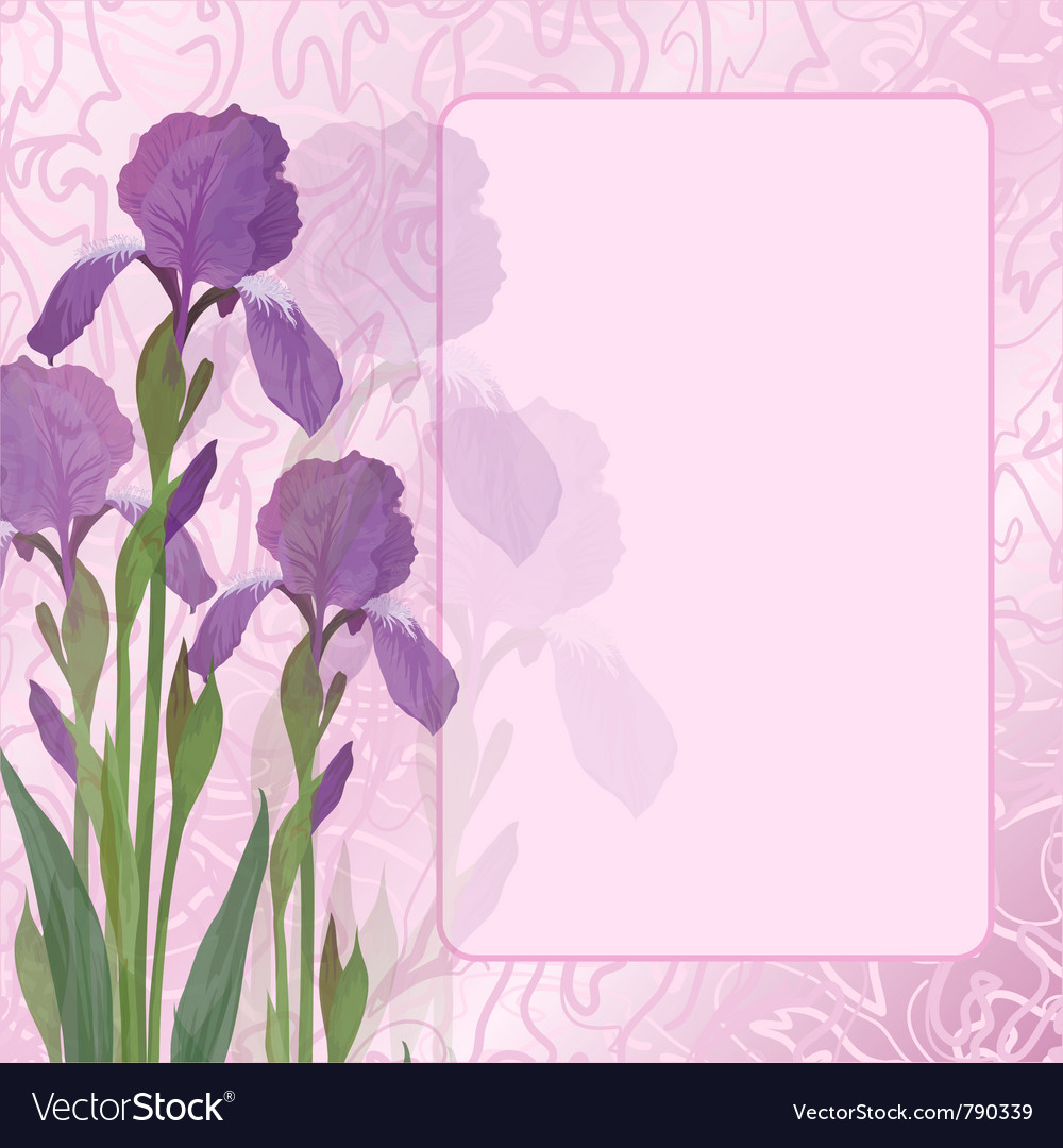 Flowers iris on pink background royalty free vector image flowers iris on pink background vector image izmirmasajfo