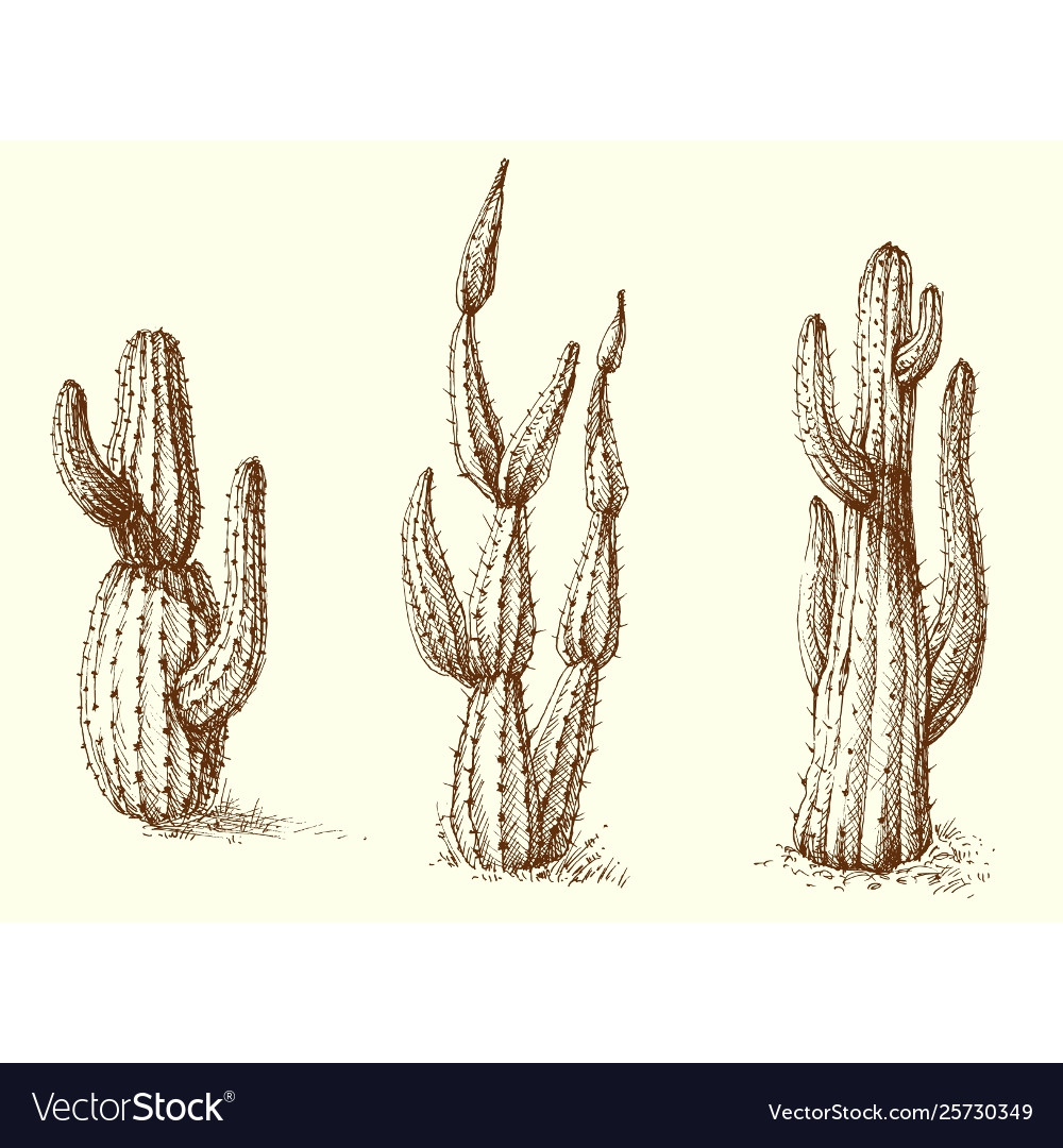 Cactus set hand drawing