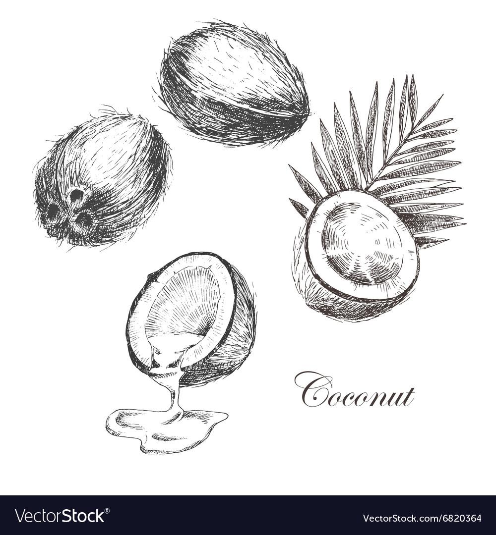 рисунок кокоса карандашом кобура для маузера