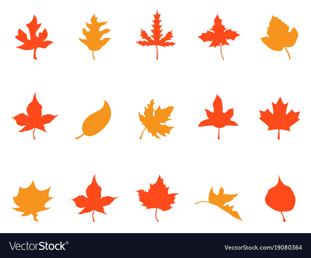 Color Autumn Leaves Patterns Icons