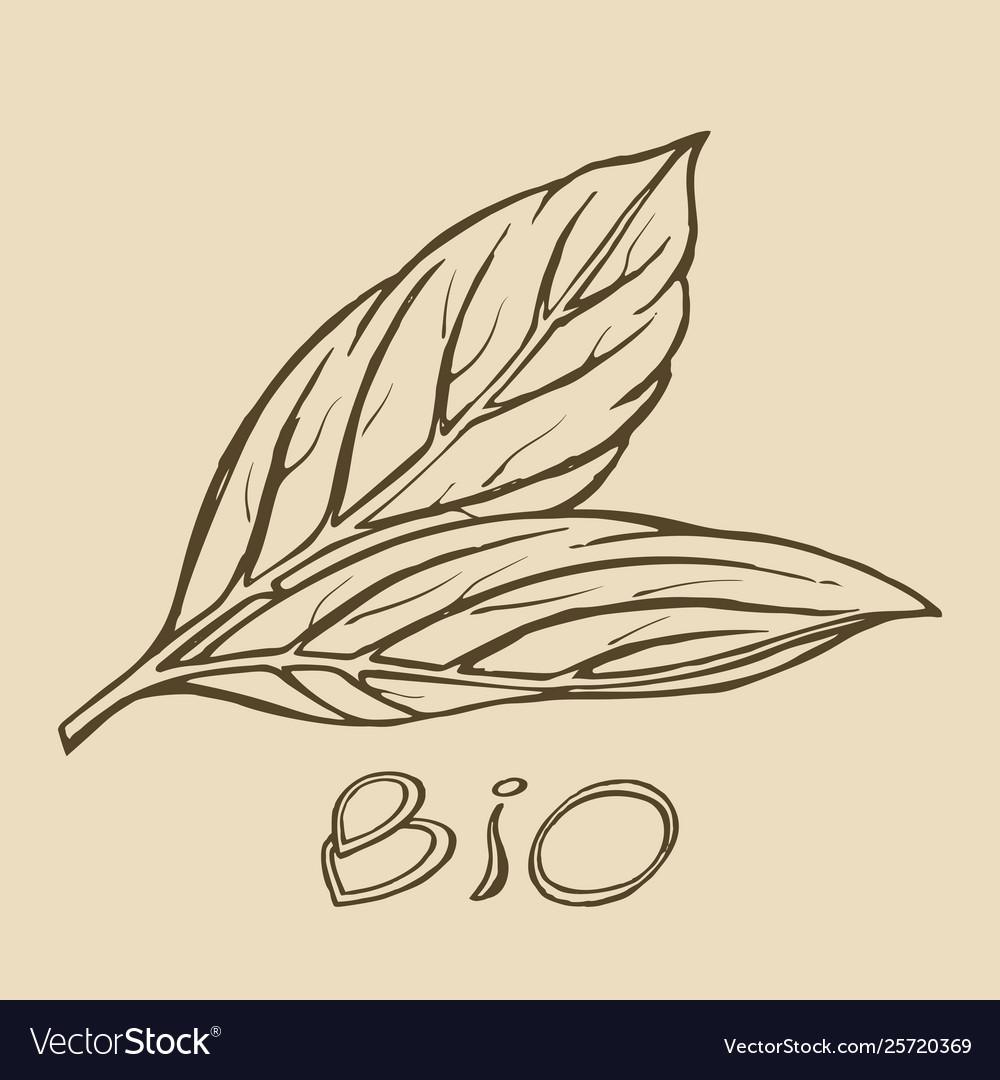 Bio leaf logo sketch