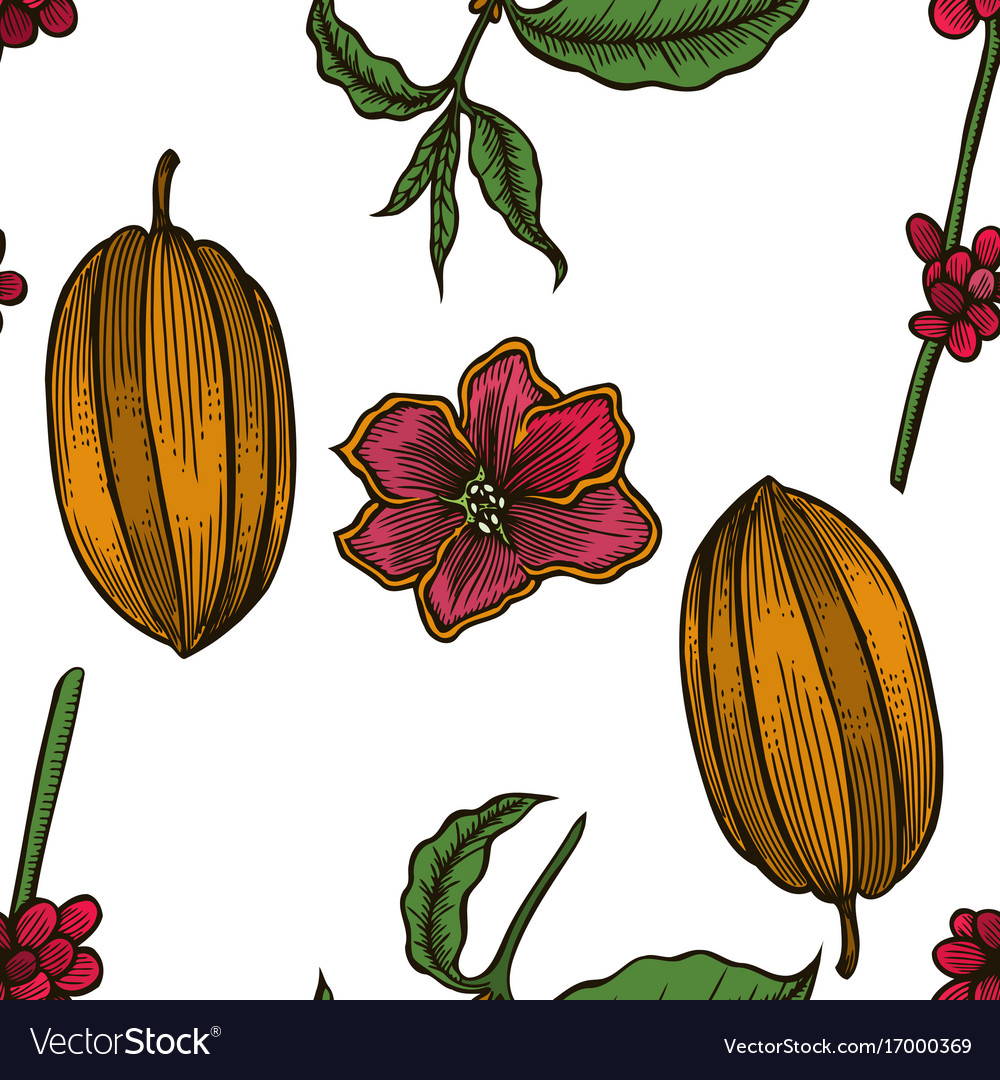 Seamless pattern of cocoa beans