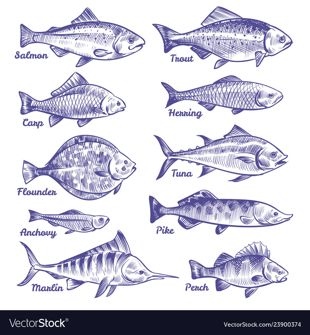 Hand drawn fishes ocean sea river fishes sketch